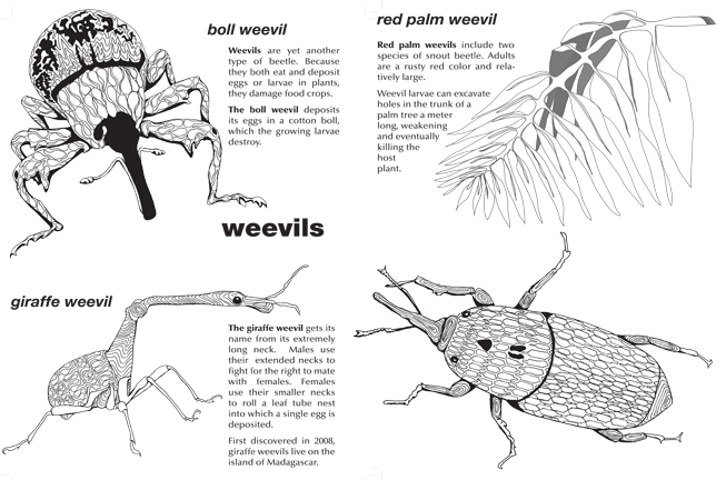 Color Your Own Weevils